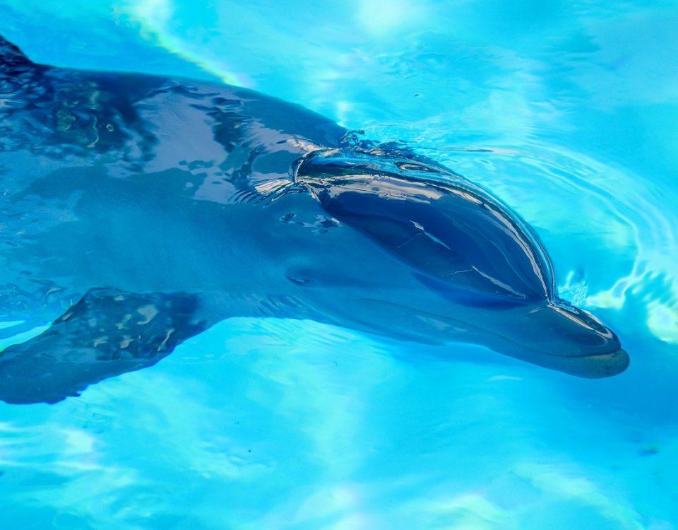 où nager avec les dauphins