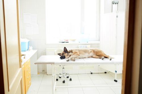 chondroprotecteur pour chien